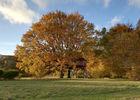 lacabanedeschenes-automne©Mengeot