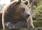 2016-parc-animalier-pyrenees-00-argeles-gazost