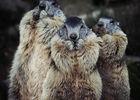 2016-parc-animalier-pyrenees-12-argeles-gazost