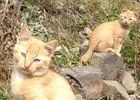 CAUSSIEU Francis  Grange 6 pers -  chats