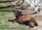 CAUSSIEU Francis  Grange 6 pers -  chèvres