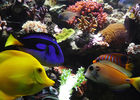 aquariumtropical12-pierrefittenestalas-HautesPyrenees