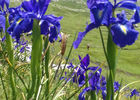 fleurs-deffarge-argelesgazost-HautesPyrenees