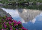 fleurs2-deffarge-argelesgazost-HautesPyrenees