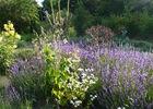 jardin-medicinal-de-l-ermitage---Marie-Cloteau---Sainte-gemmes-le-robert---mayenne