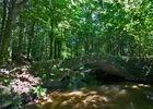 sentier-d-interpretation-arboretum-pontmain-53-iti-cp greboval (5)