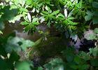 sentier-d-interpretation-arboretum-pontmain-53-iti-cp greboval (7)