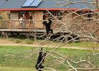 Cerza Safari Lodge - Hermival les Vaux - vue sur les singes