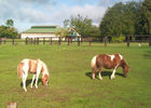 Centre équestre chevaux Calvados