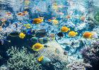 Loi-Brest-Oceanopolis-Aquarium-pavillon-tropical-Copyright Benjamin Deroche