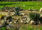cactus 1_modifié-2