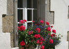 grande rue chere fleurs