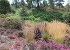 Forêt Iffendic chambre au loup domaine de Careil et boutavent ©office de tourisme Lac de Trémelin (4)