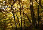 arbres parés d'ocre