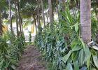 Au Domaine du Vacoa
