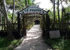 Pinpin (Le)