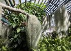 Mascarin Jardin Botanique de La Réunion