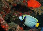 Réserve Naturelle Marine de La Réunion - Sentier sous-marin de l'Ermitage