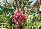 Domaine des Mille Cocos