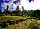 Jardin des Bestioles (Le)