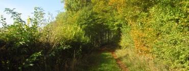 Forêt Bérulle CP Berulle Patrimoine.jpg