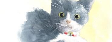 1 chaton leçon_1000pix.jpg