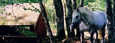 lavoir Cornées 2 (concours photo Office de Tourisme).jpg