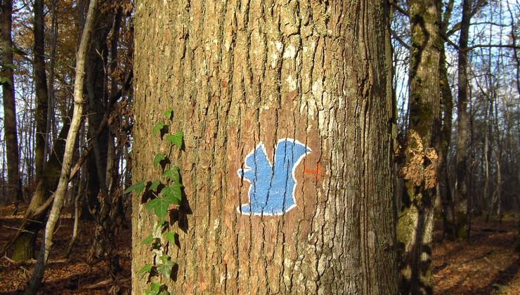 logo sentier de l'écureuil.jpg