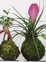 Stage d'art végétal - Création de kokébana