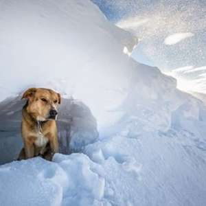 Découverte du travail de chien d'avalanche avec Saab et son maître