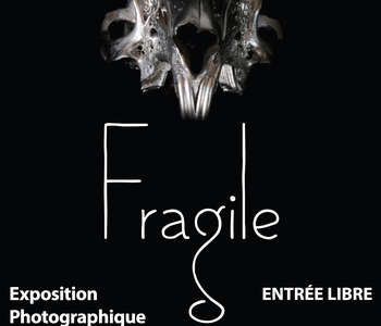 Exposition photo au Muséum : « Fragile »