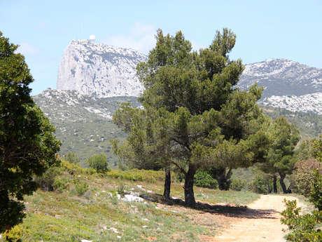 Le Pic de Bertagne depuis Auriol