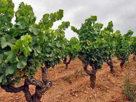 Wine tasting - Domaine Sainte Marie de Crozes