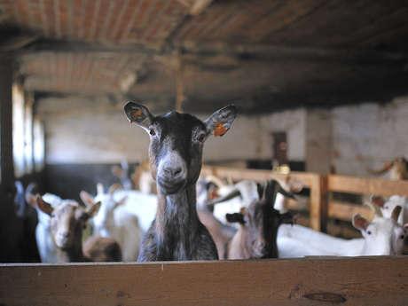 Chèvrerie de la Petite-Vacresse