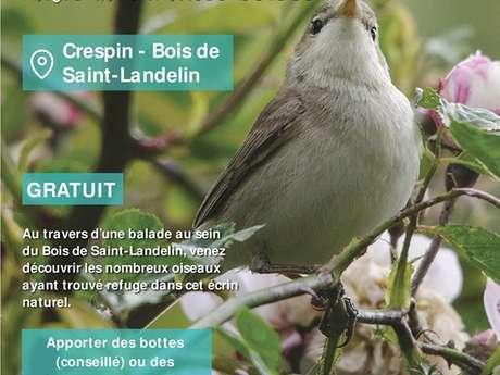 Les oiseaux des milieux humides boisés