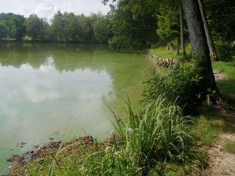 Circuit Le Pont des Fées et l'étang des Voivres