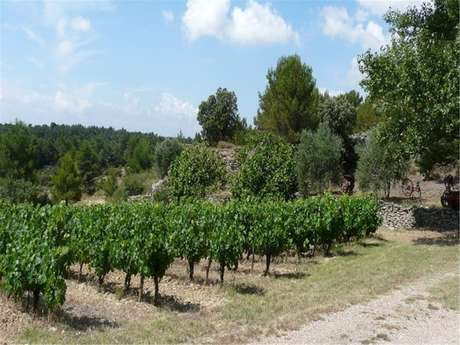 Wine tasting - Domaine de Fontanille Haut