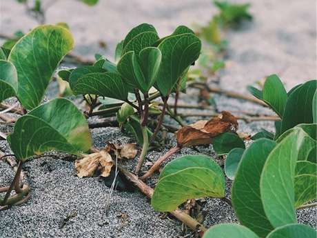 Zarlor balade guidée Bord'mer - Les tortues marines