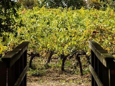 Dégustation de vins - Château de Caux et Sauzens - De la Vigne à la Cave