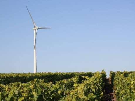 D'Eole à Dyonisos... Du vent au vin!
