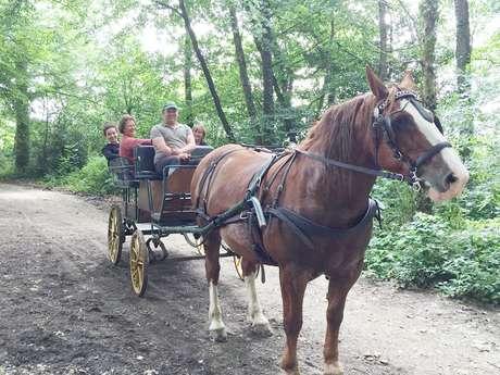Promenade en attelage // Centre Equestre de Laval