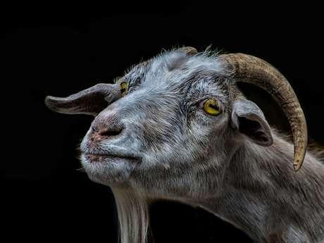 Circuit de randonnée : Les Mangeurs de Chèvres