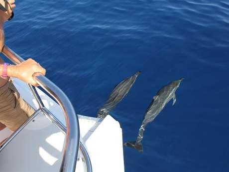 Zarlor Rendez-vous avec les cétacés en bateau - Excursion Conviviale