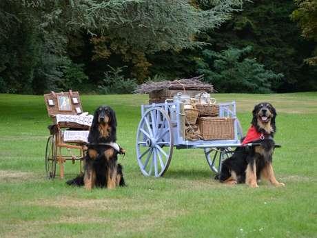 Concours de chiens d'attelage