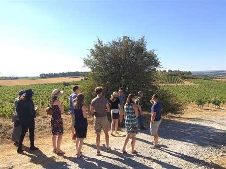 Excursion privée en minibus - Journée - Visite de 3 vignobles & Dégustation de vins - F/GB