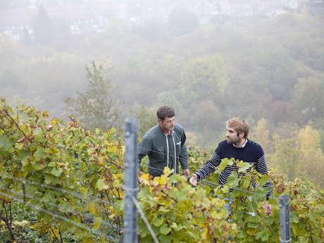 Le terril viticole