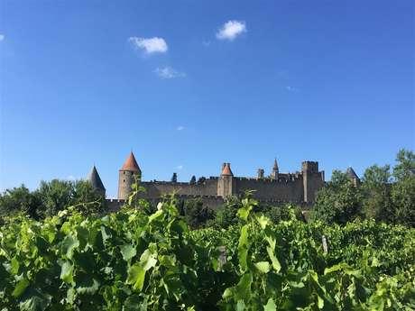 Excursion en minibus - Demi journée découverte des vins de l'Aude