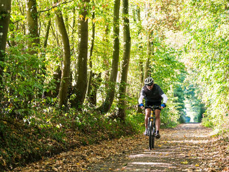 Balade Vhello - Bois et forêts (40 km)