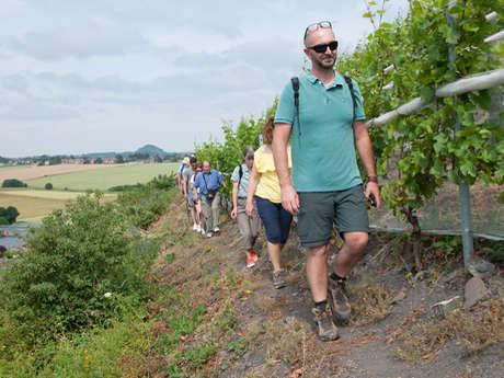 Oenologie au pied du terril viticole