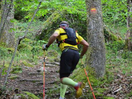 Circuit Trail n°7 : les bois de Sainte Feyre